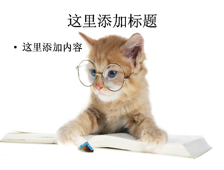 小猫看书图片ppt模板免费下载