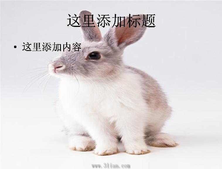 小白兔图片; 动物小白兔