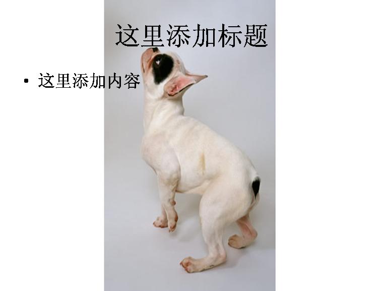 小白狗素材图片ppt