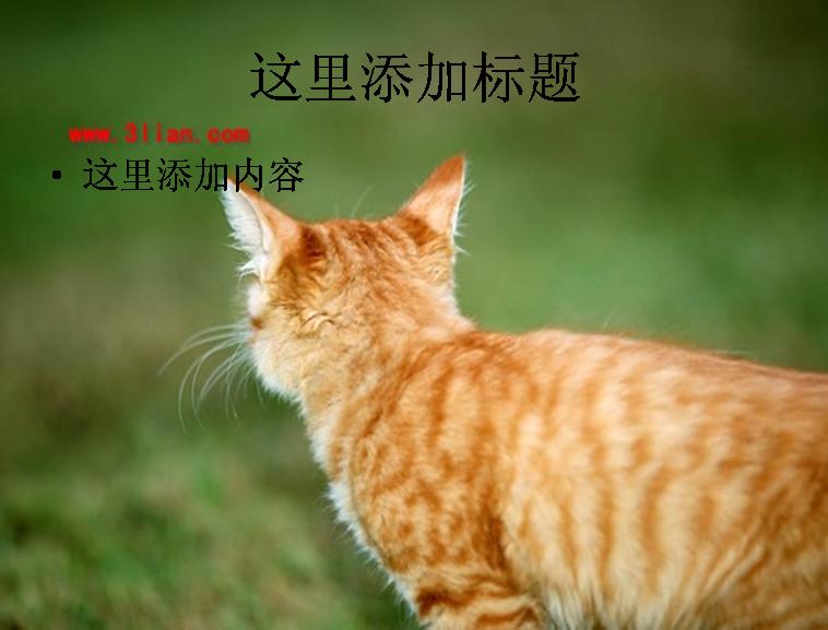 小花猫图片ppt模板免费下载