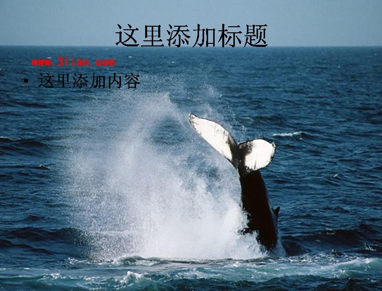 巨型鲸鱼图片 支持格式:ppt wpp 文件大小:
