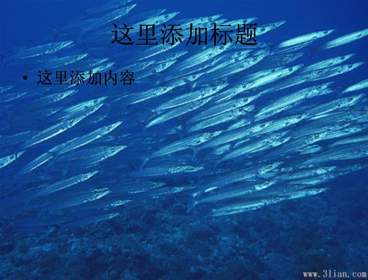 海底世界-鱼图片ppt