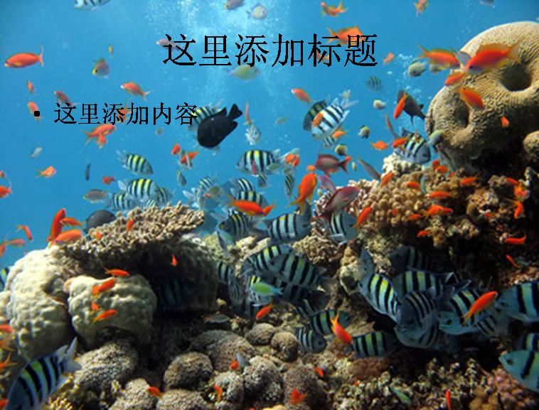 海底世界图片素材动物素材模板免费下载_101640- wps