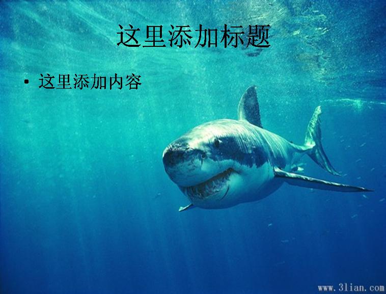 海底动物-大鲨鱼图片