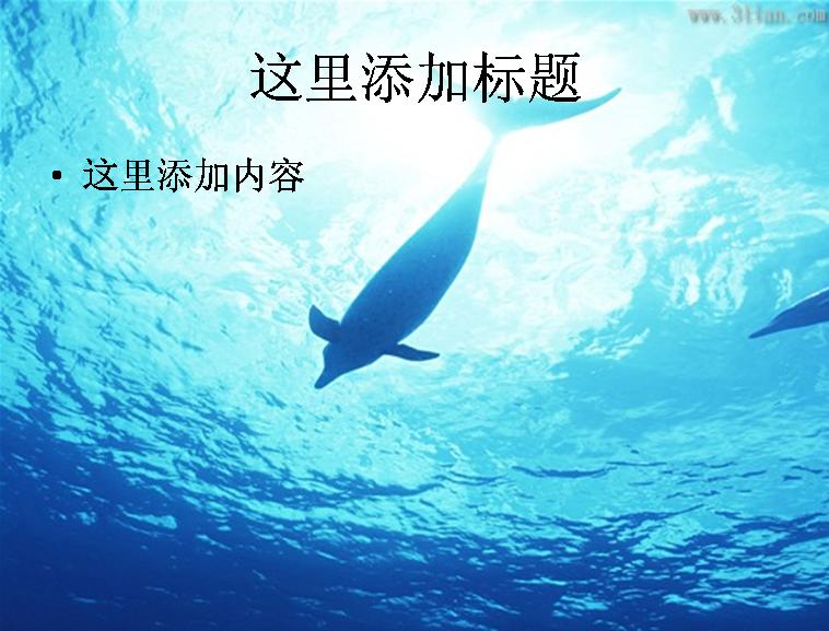 海洋动物图片ppt模板免费下载