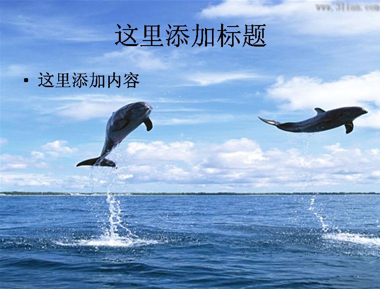海豚表演图片