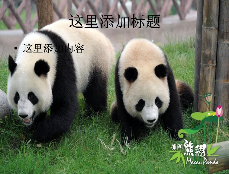 熊猫ppt精选集(2_32)模板免费下载