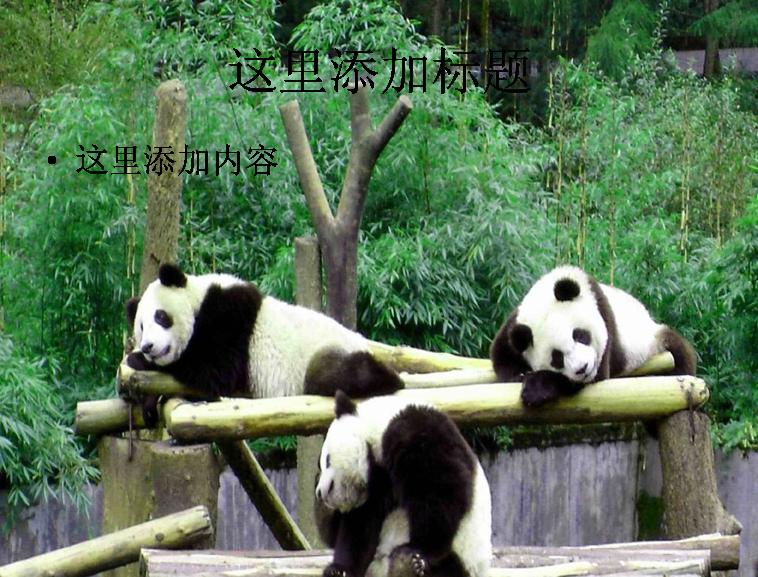 熊猫ppt精选集(7_32)模板免费下载