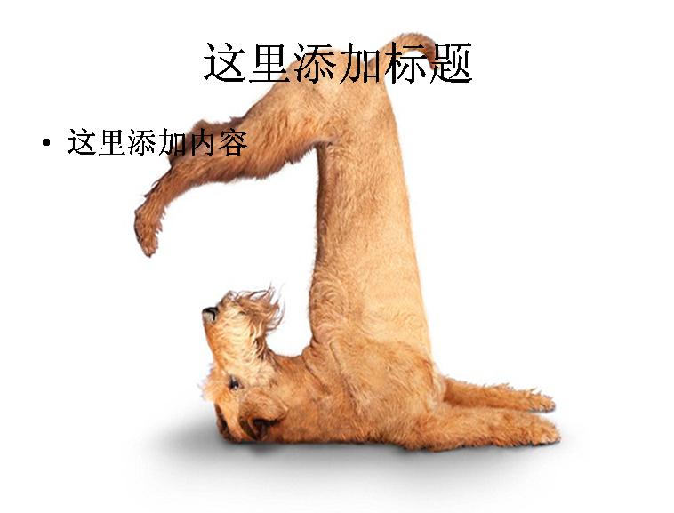 狗狗瑜伽高清图片ppt模板免费下载_102033- wps在线