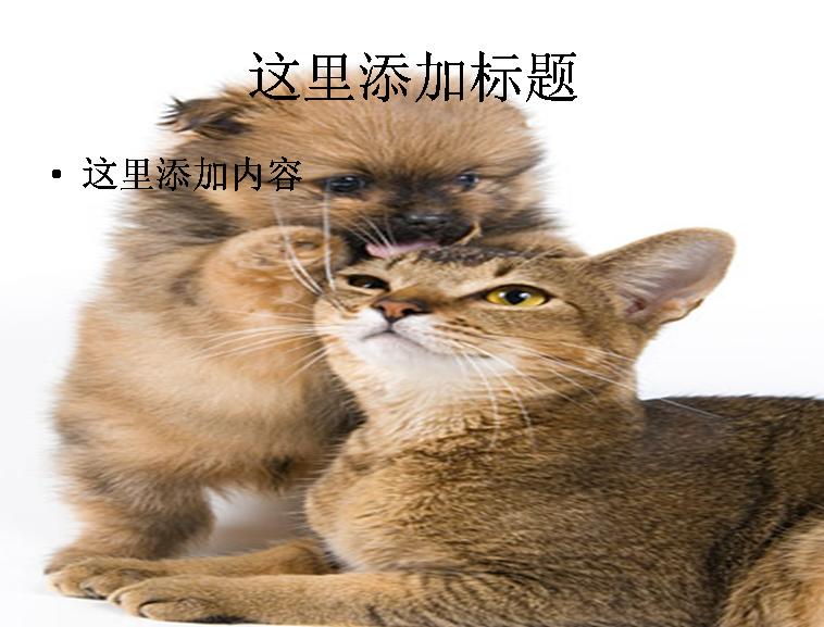 精美的猫猫图片ppt素材-1动物素材