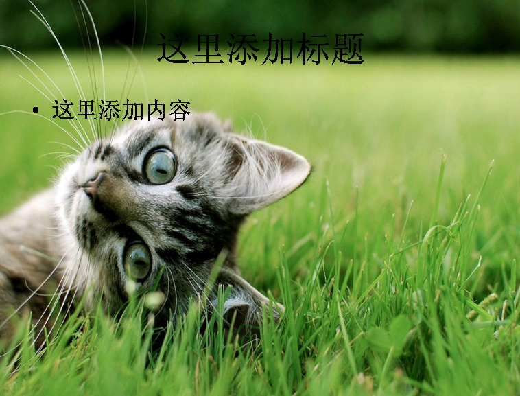 萌猫ppt(9_10) 标  签: 可爱动物动物萌照 支持格式: ppt wpp