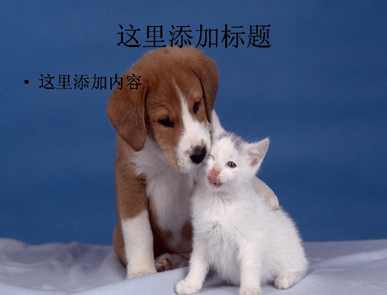 萌猫萌狗亲如一家(4_7) 标  签: 可爱动物动物萌照 支持格式: ppt