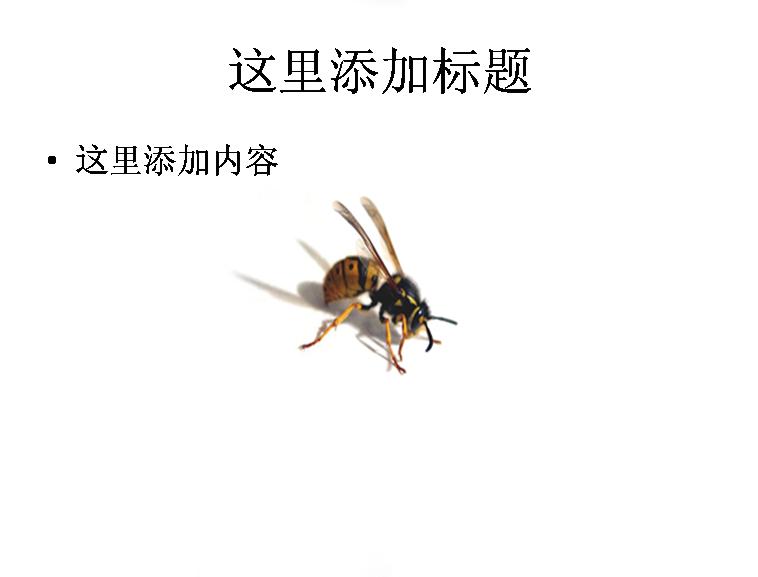 蜂蜜高清图片ppt模板