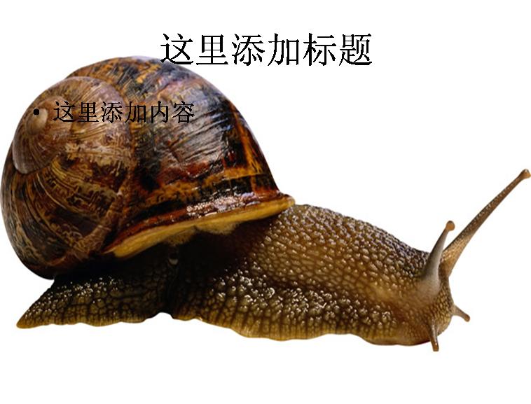蜗牛素材图片ppt