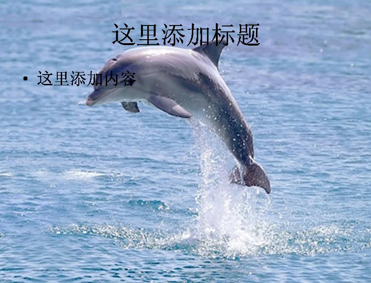 跳跃的海豚图片ppt素材动物素材模板免费下载