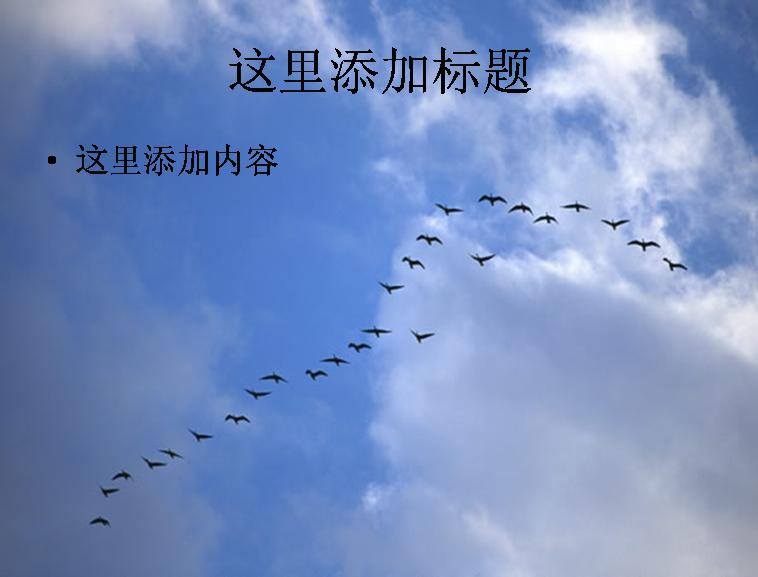 飞翔的大雁图片ppt