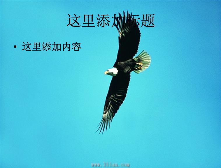 飞翔的老鹰图片ppt模板