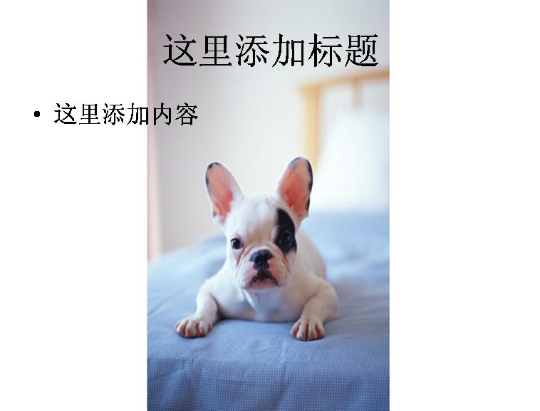 高清可爱的小白狗图片ppt模板_医学类模板下载_财经