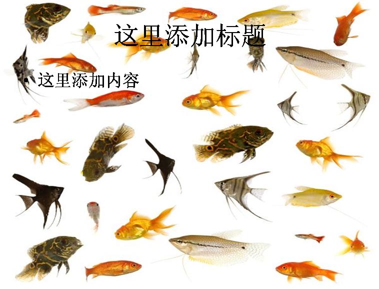 鱼类集合高清图片ppt动物素材