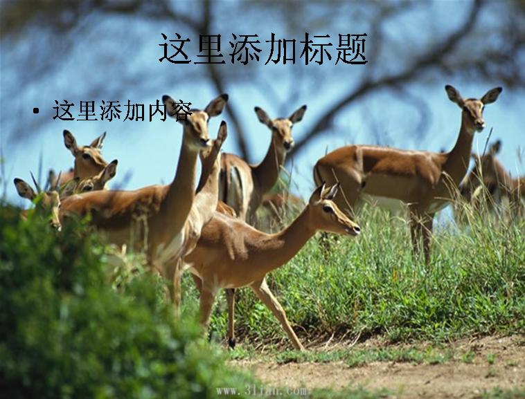 鹿动物图片模板免费下载