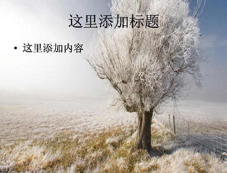 冬天,树,篱笆,天空,风景ppt封面