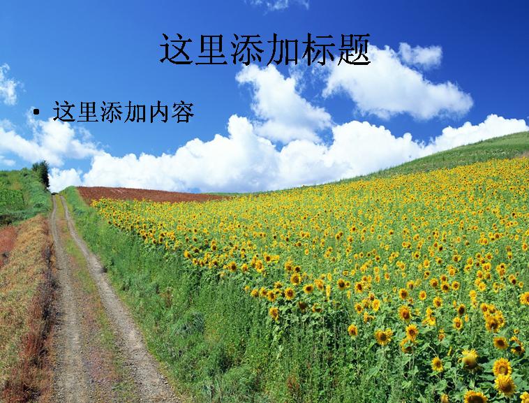 向日葵花海高清ppt(7)模板免费下载_105309- wps在线