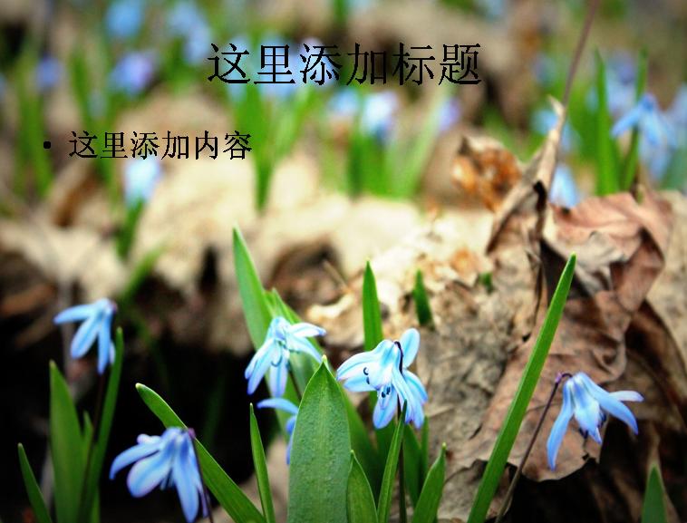 标  签: 风景ppt风景图片风景ppt封面地中海蓝钟花 支持格式: ppt wpp