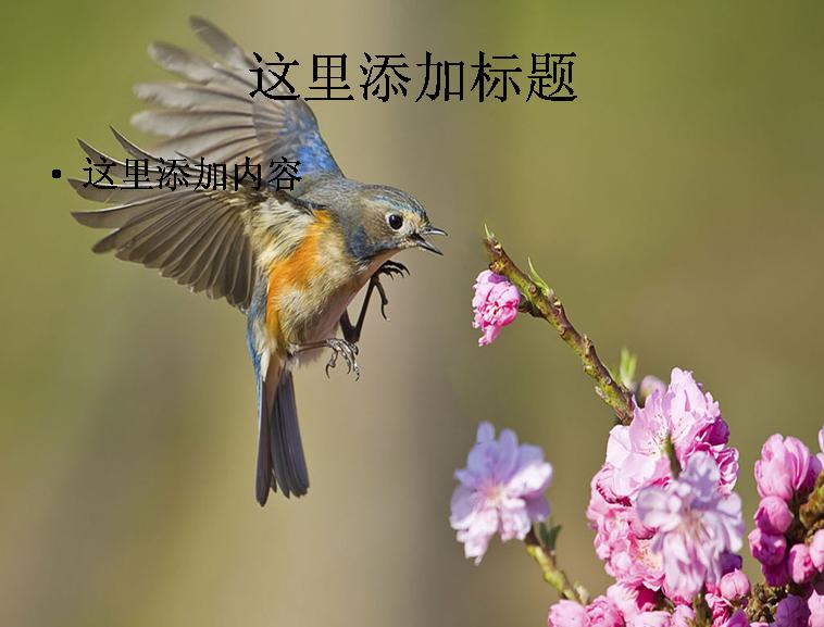 大自然鸟类飞行摄影高清ppt封面(11)模板免费下载
