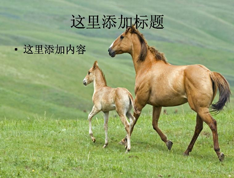 奔驰的宝马高清动物风景ppt封面(8)