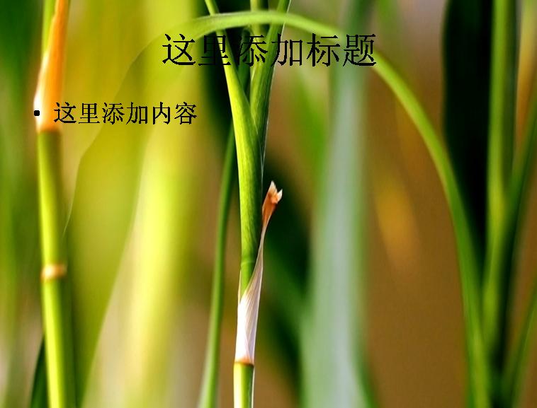 春天绿色植物ppt封面