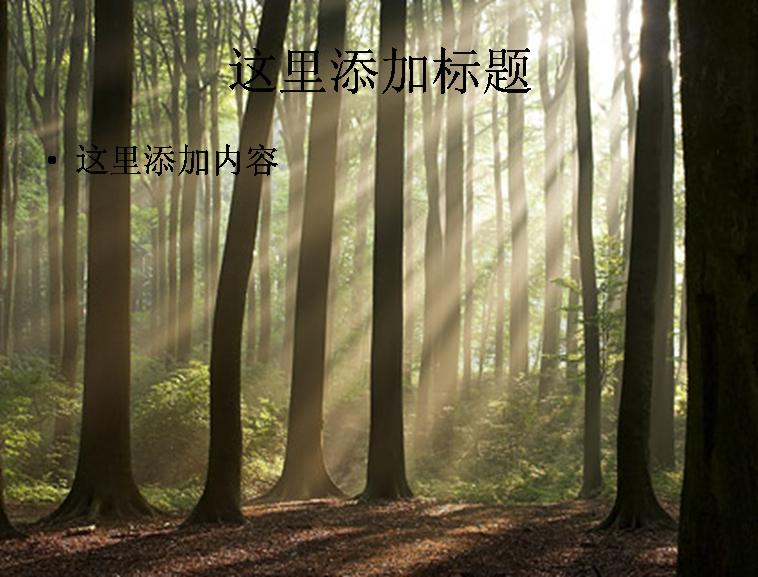 树林精品ppt模板范文素材风景ppt模板范文