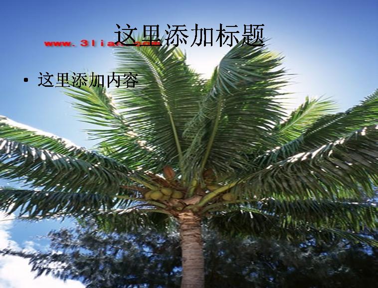 ppt海边椰子树风景背景