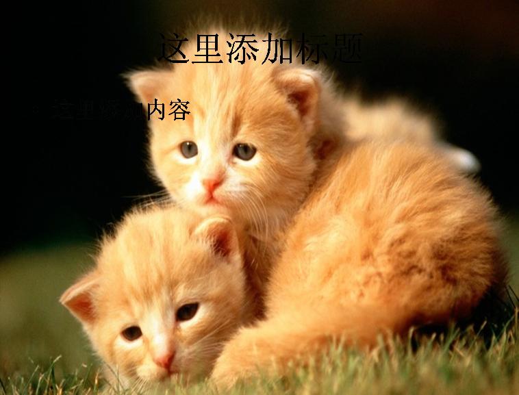 电脑ppt封面可爱小猫咪萌宠背景图片(12)模板