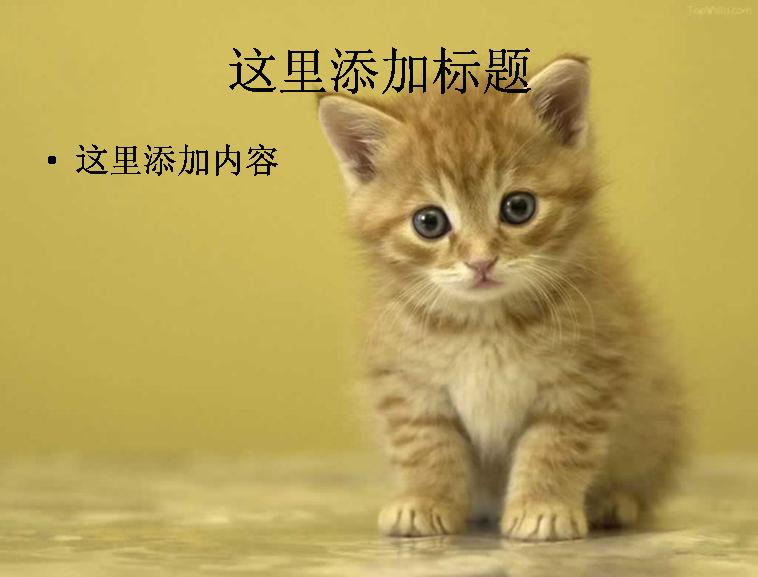 电脑ppt封面可爱小猫咪萌宠背景图片(2)模板免费下