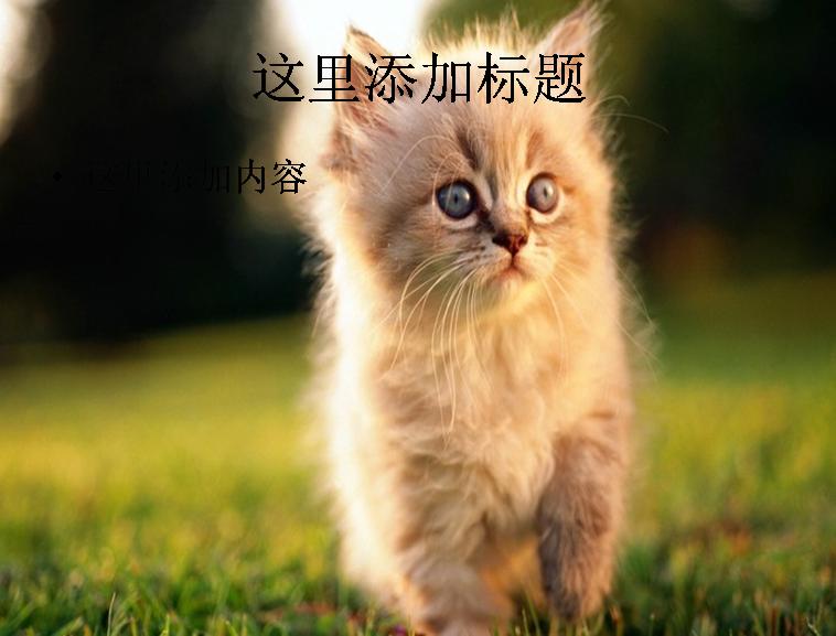 电脑ppt封面可爱小猫咪萌宠背景图片(3)模板