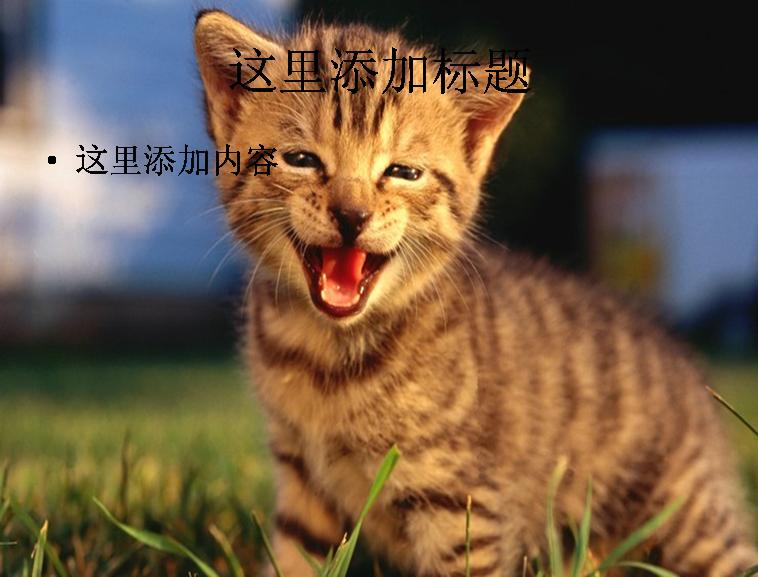 电脑ppt封面可爱小猫咪萌宠背景图片(4)模板免费下载