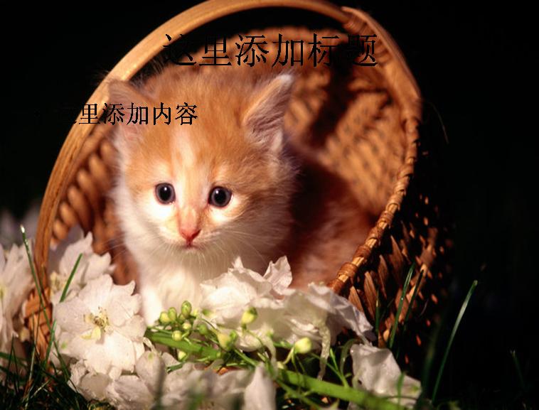 电脑ppt封面可爱小猫咪萌宠背景图片(5)模板免费下载