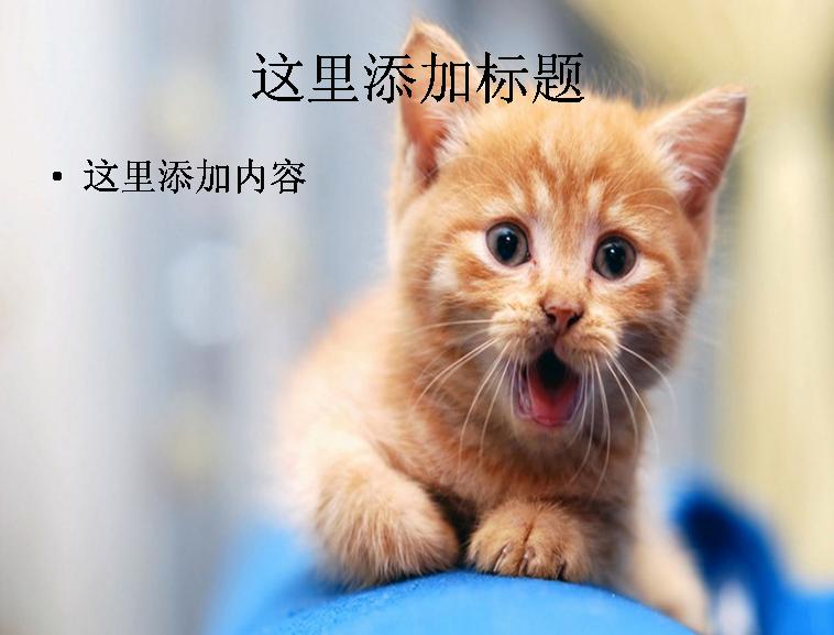 电脑ppt封面可爱小猫咪萌宠背景图片(6)模板免费下载