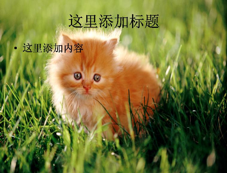电脑ppt封面可爱猫咪背景图片(7)模板免费下载