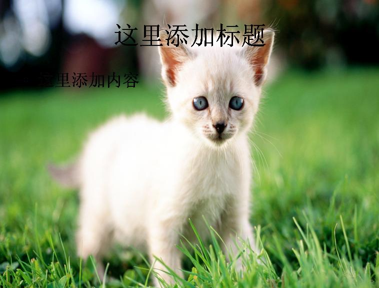 电脑ppt封面可爱猫咪背景图片(9)模板免费下载