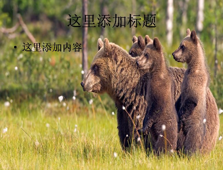 电脑宽屏ppt封面可爱的动物风景图片(7)模板免费下载