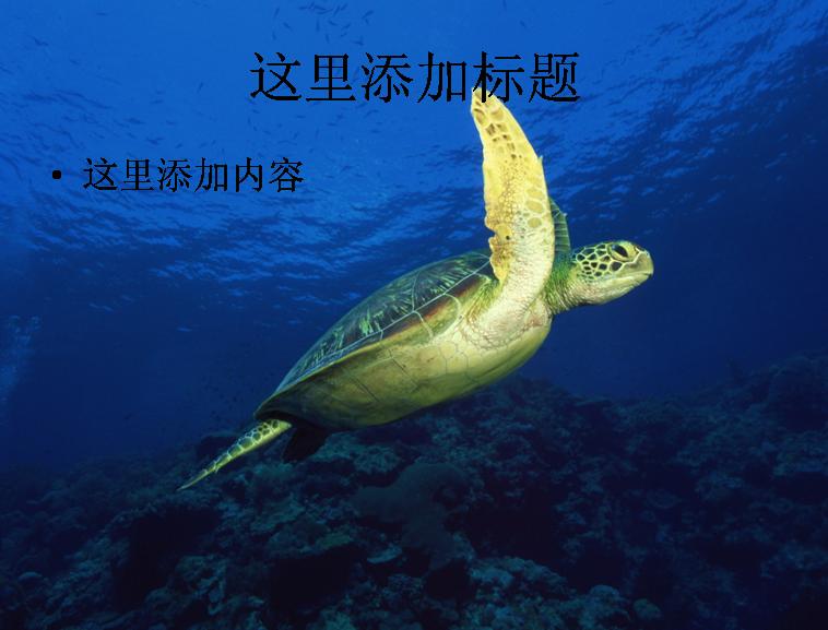 电脑风景ppt封面海底世界背景图片(5)模板免费下载