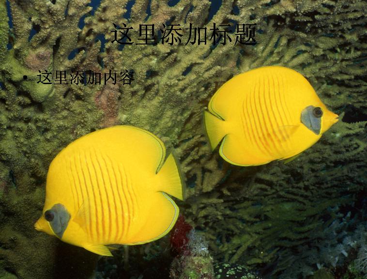 电脑风景ppt封面海底世界背景图片(9)模板