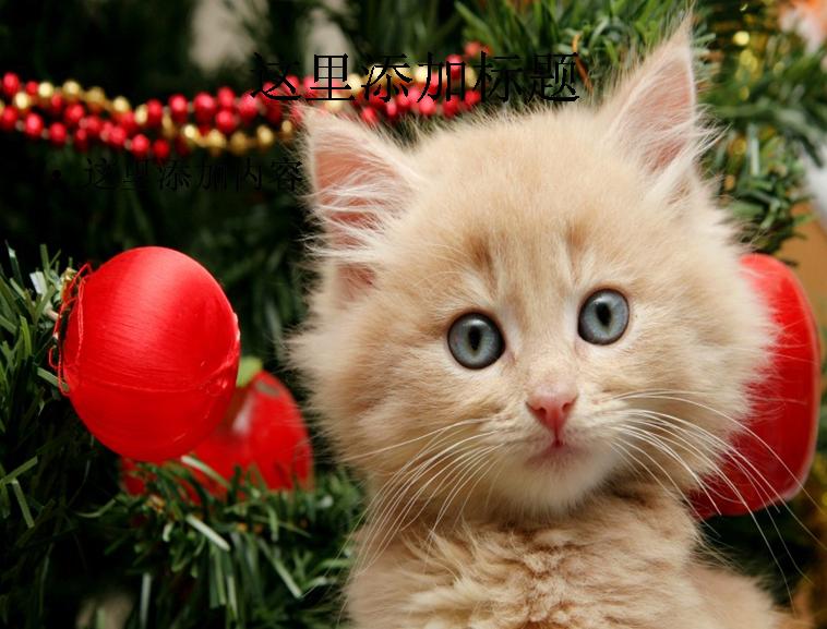 圣诞节可爱猫咪ppt(14_16)模板免费下载_112490- wps