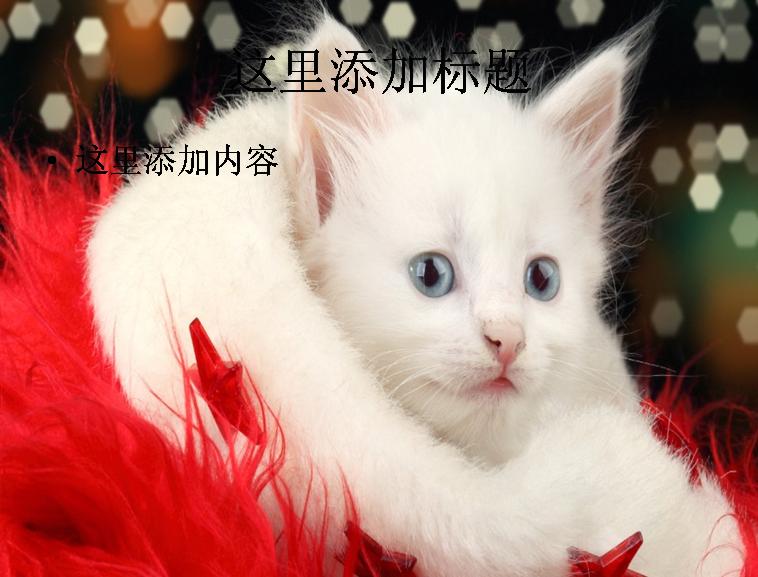 圣诞节可爱猫咪ppt(4_16)模板免费下载