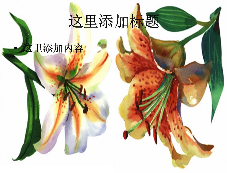 2朵手绘水彩百合花高清图片ppt花卉图片ppt