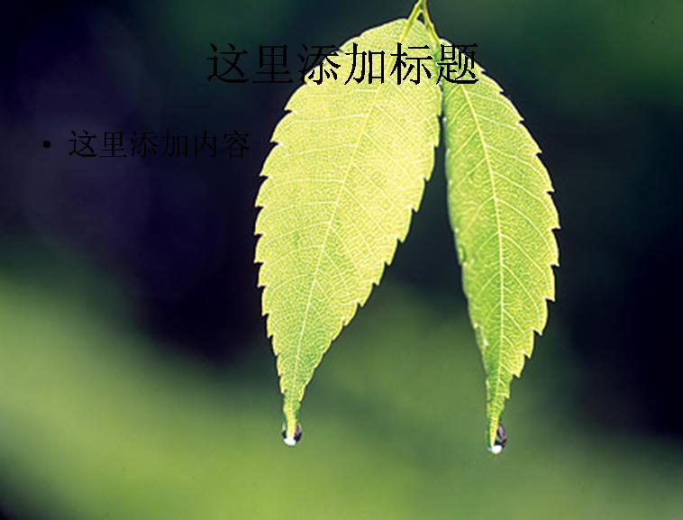 2片带水珠的树叶图片ppt素材植物素材模板