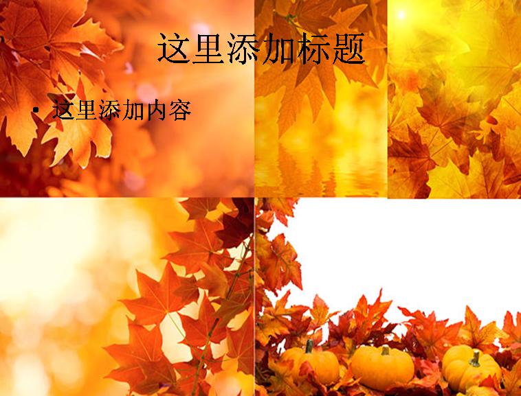 5张秋天的树叶高清图片ppt植物素材