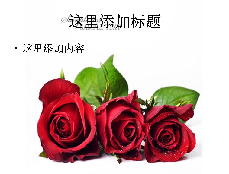 三朵红玫瑰图片ppt模板免费下载