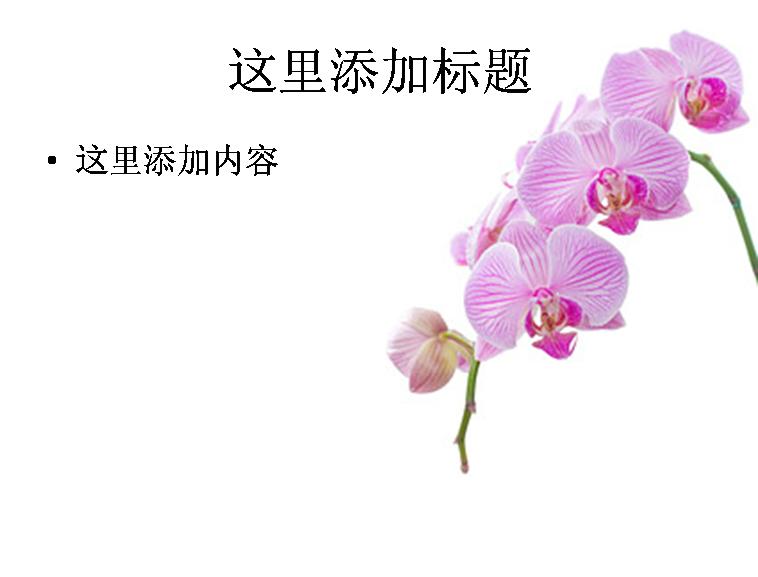 兰花白底图片ppt素材-6花卉图片ppt